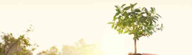 Tierra y mujer : Tu Bi'shvat