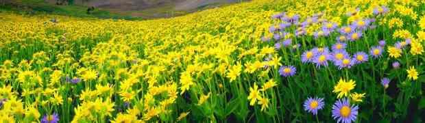 El mes de Adar y su dulce olor...